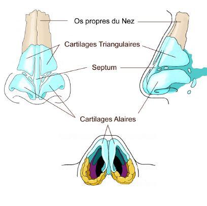 Correction deviation de la cloison nasale